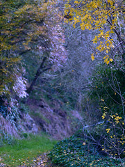 "Autumn in Daylesford • <a style=""font-size:0.8em;"" href=""http://www.flickr.com/photos/44919156@N00/5983938509/"" target=""_blank"">View on Flickr</a>"