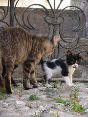 Kitten & Mom (Toni Kaarttinen) Tags: animal loving stairs cat fence mom island greek kitten gate mother greece grecia creature griechenland rodos rhodes grèce rodi rodes rhodos grécia rodas dodecanese elláda ελλάδα hellás ródos ρόδοσ ἑλλάσ