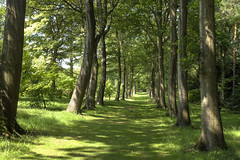 The Avenue (jimsumo999) Tags: green path yorkshire verdant paths avenue snape caminho thorpperrow thorpeperrow bedale
