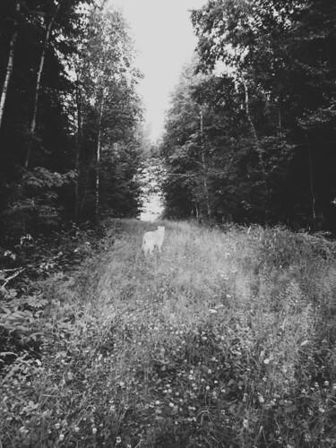 grassy highway, b&w