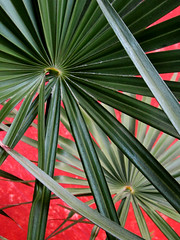 Geometric Leaves (shaire productions) Tags: plants plant macro green geometric nature leaves lines composition design pattern natural image artistic line tropical vegetation framing shape bold imagery