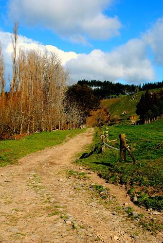 NZ_farm_5