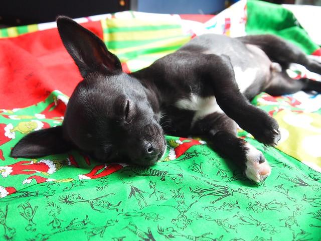gratuitous cute dog pic