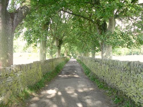 Trees + lane