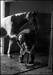 Spa Day at the Ranch (Kris McNeil) Tags: ranch blackandwhite horse barn farm wyoming horsehoe
