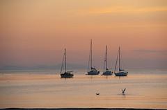Port Erin evening (manxmaid2000) Tags: sunset sea holiday seascape tourism beach evening coast boat sailing harbour dusk seagull lifestyle anchor yachts isleofman mourne manx iom porterin d700 nikond700