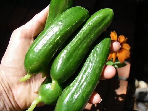 Turkish cukes