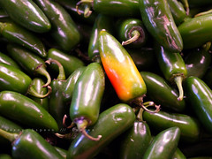 An Embarrassed Pepper (Harry Lipson III) Tags: food hot green nature vegetables healthy natural peppers spicy veggies veggie edible source vitamins caliente hotpeppers tangy allnatural panasonicgf1 harrylipsoniii harrylipson harryshotscom copyrightbyharrylipsoniiiallrightsreservednounauthorizedusagewithoutexpresswrittenconsent harrylipson3 visitharryshotscom iinviteyoutovisitmywebsiteharryshotscom totalslackerphotographycom totalslackerphotography thephotographyofharrylipson