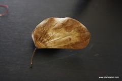 Manualidade_Decorar con hojas secas (I) (6)