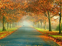A Walk into Misty Autumn (Stanley Zimny) Tags: park autumn trees tree fall nature colors leaves automne catchycolors garden botanical leaf colorful colours seasons natural fallcolors herbst nj autumncolors fourseasons autunno autumnal colorexplosion 4seasons otono sgis skylands ahorn naturephotos jesien natureimages jesiennie