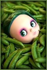 Harvesting Peas (219/365)