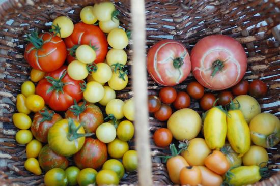 2nd big batch of tomatoes