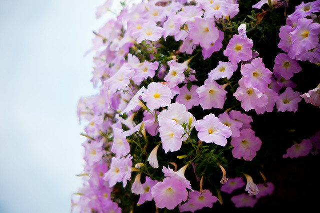 Flower Basket [EOS 5DMK2 | EF 24-70L@70mm | 1/2000 s | f/2.8 |  ISO200]