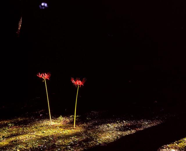 木陰のスポットライト