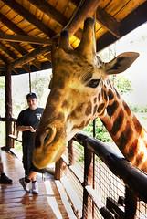 "PhotoFly Travel Club Kenya Safari 2011! • <a style=""font-size:0.8em;"" href=""https://www.flickr.com/photos/56154910@N05/5892338305/"" target=""_blank"">View on Flickr</a>"