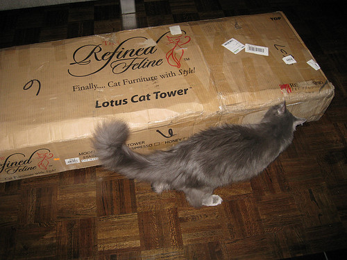 Lotus Cat Tower
