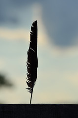 Black Feather DSC_0372 by Mully410 * Images