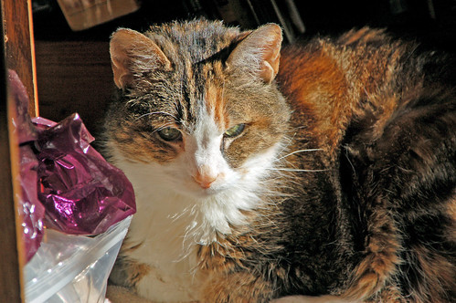frisker in her sunbeam.jpg