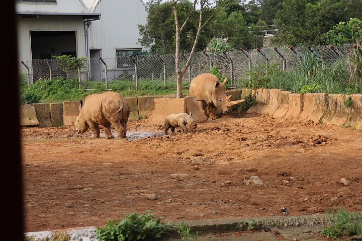 六福村動物園049