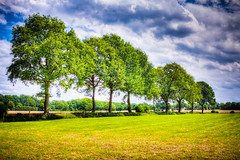 Summer feelings (blichb) Tags: summer tree nature germany deutschland sommer natur feld baum hdr braak schleswigholstein canon50d blichb sigma2470mm128dghsm braakermhle