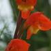 ... e flores