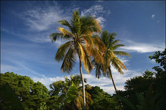View From A Hammock (LifeLover4) Tags: sunset palms island paradise coconut trinidad tropical caribbean tt polarized windward tropics tobago caribe westindies efs1755mmf28isusm rainroom lifelover4 stickneydesign
