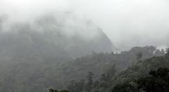 Core Forest (ashpoosh) Tags: mist forest kerala monsoon silentvalley