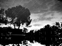 Grey reflection (markb120) Tags: sky bw reflection tree water pool night sunrise greece ellada kamena vourla