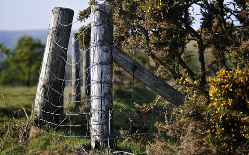 Handsome Fence Posts In The Brecon Beacons