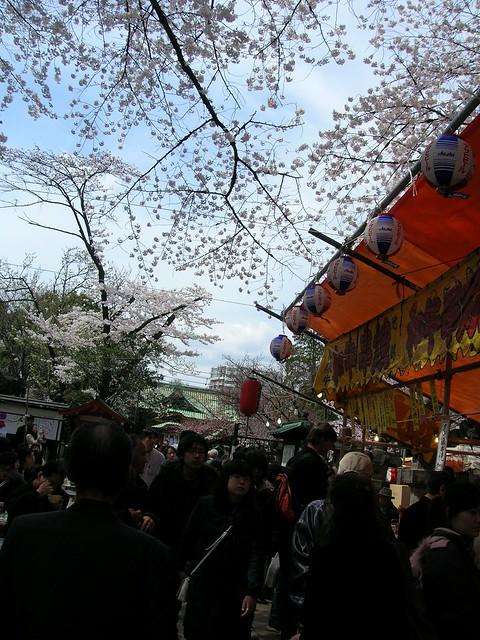 d7-08-ueno-park-matzuri