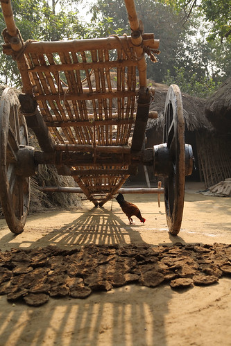 Chicken, dung and farm cart in West Bengal, India