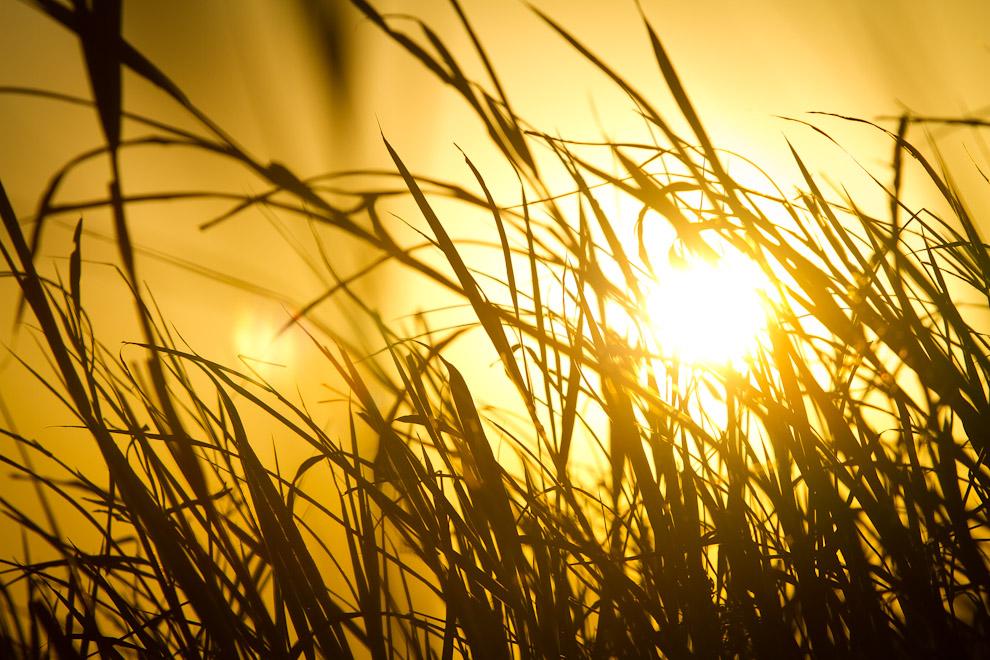 Los últimos rayos de sol se filtran entre la hierba, la cercanía del Río Jejuí y la naturaleza circundante hicieron del atardecer un espectáculo sin igual. (Tetsu Espósito)