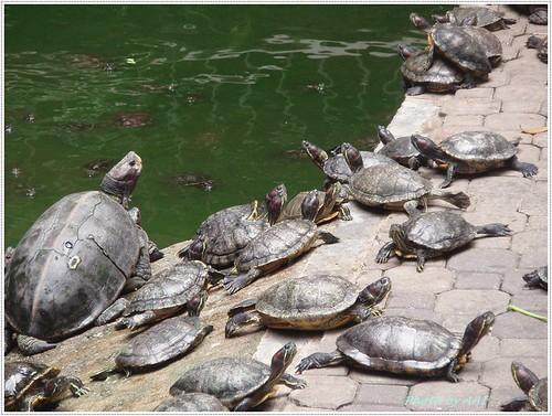 Tortoise pond