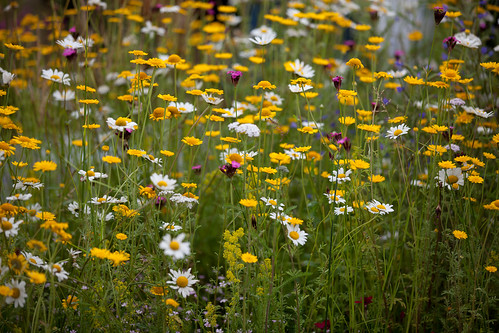 540/1000 - Flowerscape by Mark Carline