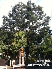 朝散歩(2011/7/25 7:10-7:30): 恵比寿公園