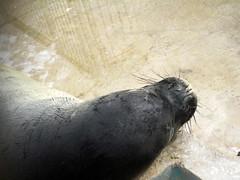 IMG_5108 (dolphingirl0609) Tags: world sea camp san texas dolphin lion seal killer whale orca beluga antonio advanced career