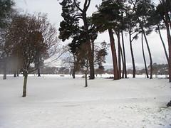 DSC01493.JPG (Jellydog!?!) Tags: trees winter newzealand christchurch snow canterbury sugarloaf porthills hagleypark 2011