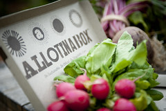 ALLOTINABOX - Radish seeds (ALLOTINABOX) Tags: urban rooftop vintage design salad cool healthy hand balcony cook vegetable seeds pot eat gift type patch allotment radish plot windowbox seedbox gyo growyourown vegetablebox seedboxes urbangrowing allotinabox
