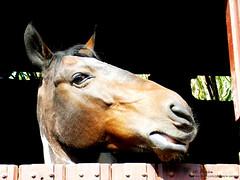 Haras Setti (W. Pereira) Tags: cavalos haras cocheira setti ibina clicksp wpereira