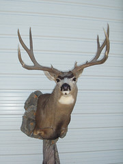 "Deer Taxidermy • <a style=""font-size:0.8em;"" href=""http://www.flickr.com/photos/27376150@N03/5986345741/"" target=""_blank"">View on Flickr</a>"