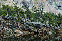 Walking trees: Imagined as a cover for a fantasy book (Steven Bratman) Tags: nationalpark colorado rmnp rockymountainnationalpark lochvale theloch lochlake