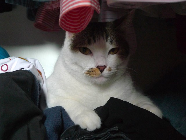 This is Maru