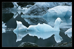Reflections of Glacial Icebergs (canon60dslr) Tags: blue lake reflection ice water alaska mirror swan rocks floating lagoon glacier iceberg kenai fjords kenaifjords pedersen pedersenglacier