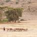 Pastores Masais