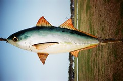 Fishing for What (我的小風景) Tags: leica fish kodak m3 新竹 南寮 hd200