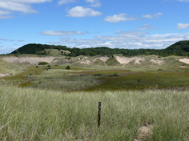 Marsh in the Saugatuck Harbor Natural Area
