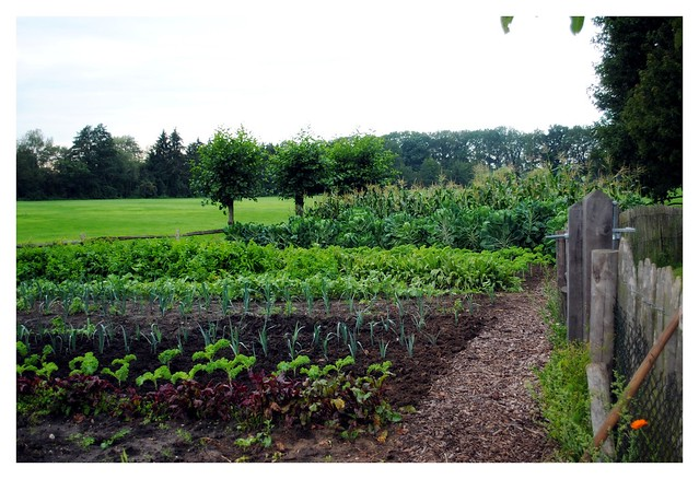 Jansens veggie patch2