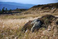 Brocken (coastwalker) Tags: grass stone landscape brocken landschaft harz coastwalker
