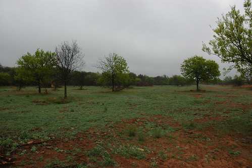 This future quail habitat was cleared of water-sucking mesquite to restore open spaces for plants and grasses using the AWEP program.