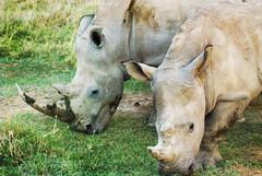 "PhotoFly Travel Club Kenya Safari 2011! • <a style=""font-size:0.8em;"" href=""http://www.flickr.com/photos/56154910@N05/5892417117/"" target=""_blank"">View on Flickr</a>"
